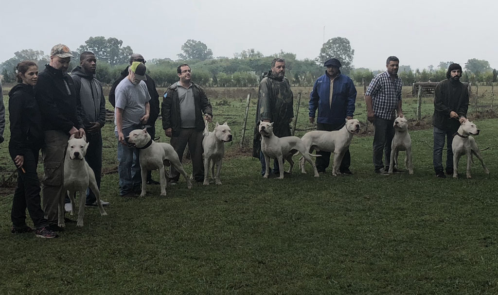 Slider - Dogo Argentino Owners and Trainers