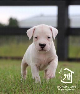 puppy walking in grass