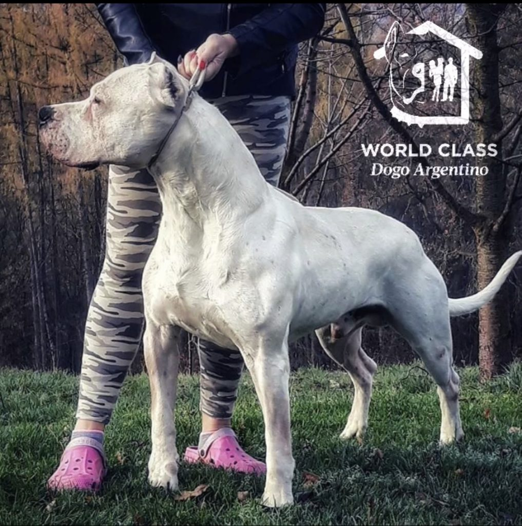 White dog standing with it's owner