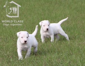 2 puppies in the grass