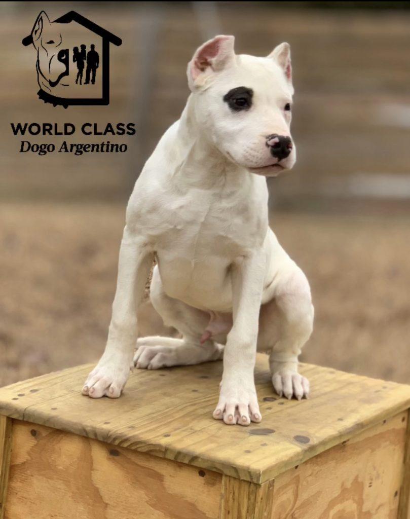 Puppy sitting on a box