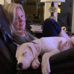 dog lying its owner