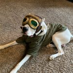 dog with goggles on