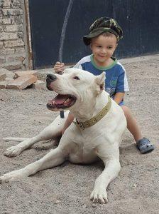 boy sitting on his dog