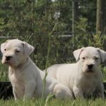 Two white puppies