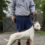 White dog standing next to owner