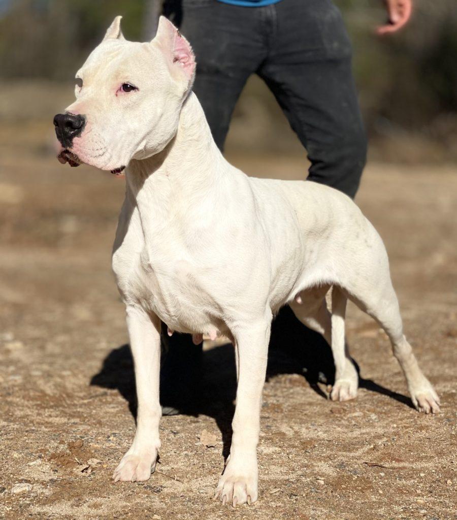Female dog posing